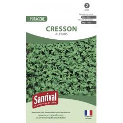 graines de Cresson Alenois