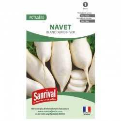 Graines de Navet Blanc dur d'hiver
