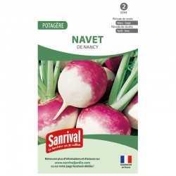 Graines de Navet de Nancy