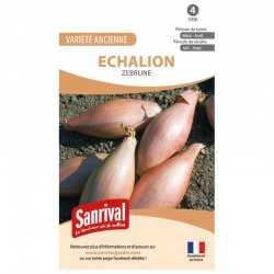 Graines d'Echalion Zebrune