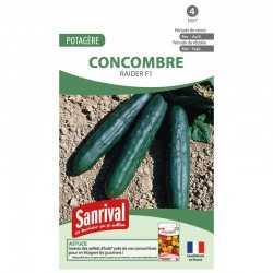 graines de Concombre Raider F1