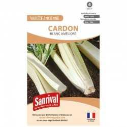 graines de Cardon Blanc amélioré