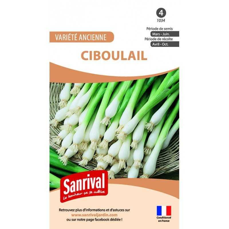 Graines de Ciboulail