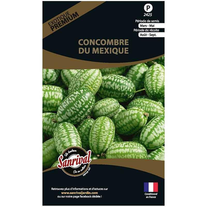 graines de Concombre du Mexique
