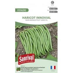 Graines de Haricot Innovial