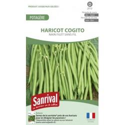 Graines d'Haricot Cogito