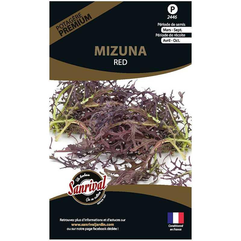 graines de Mizuna Red