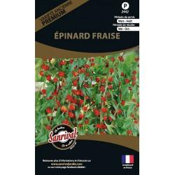 graines d'Epinard Fraise